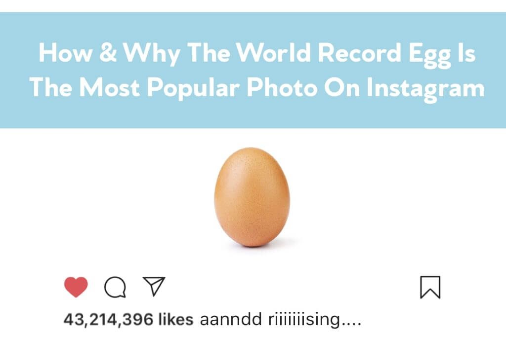 How & Why Is The World Record Egg So Popular Blog